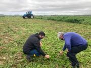 Agricultura orienta produtores para o controle da cigarrinha