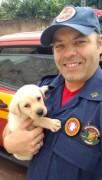 Bob é o novo filhote em treinamento para busca e resgate do Corpo de Bombeiros de SC