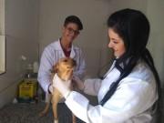 Castração contribui para diminuição de animais de rua