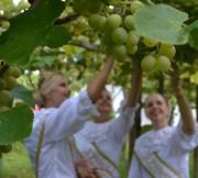 Pré-evento coloca Urussanga em clima de Festa do Vinho