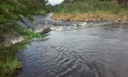 Possível crime ambiental é investigado em Treviso