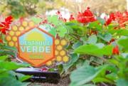 Produtores orgânicos serão homenageados com troféu Destaque Verde