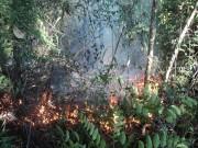 Queimadas provocadas preocupam em Cocal do Sul