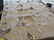"""Semana da Unesc promove um """"mergulho"""" no universo da arqueologia"""