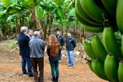 Bananicultores fazem 'dia de campo' em Siderópolis