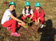 Fundai distribuirá árvores nativas na Praça da Matriz