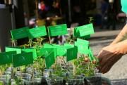 Semana do Meio Ambiente na Organização Nova Acrópole de Criciúma