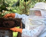 Santa Catarina investe no desenvolvimento da apicultura