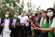 Com expectativa de 550 mil toneladas, Santa Catarina começa colheita da maçã