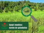 Governo de Santa Catarina volta a monitorar nuvens de gafanhotos