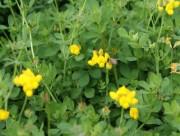Cultivo de pastagem da Epagri de SC será comercializado no exterior
