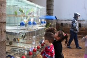 Alunos da Educação Infantil aprendem brincando sobre os animais