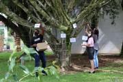 Forquilhinha ganha árvore de valores na Praça dos Imigrantes Alemães