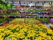 Flores purificam ambientes internos e podem alegrar Dia das Mães na pandemia