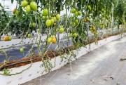 Linha DaColheita propõe soluções para plantio
