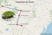 Governo do Estado monitora nuvem de gafanhotos vindo da Argentina