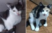 Pet: Lindas filhotinhas para adoção responsável