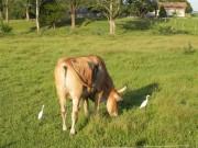 Produtores rurais devem se cadastrar para receber sementes em Forquilhinha