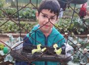 Projeto desenvolvido em escola incentiva o plantio