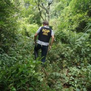 IGP realiza força-tarefa para acelerar a resposta da perícia de crimes ambientais