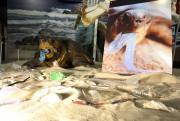 Exposição mostra os impactos da poluição na biodiversidade dos oceanos