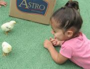 Crianças do CEI Afasc Carlos Piazza conhecem animais da fazenda