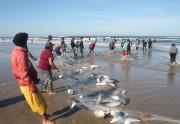 Pescadores pegam mais de 10 mil quilos em Balneário Rincão