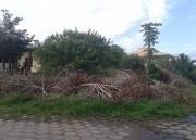 Mais de 100 proprietários de terrenos baldios são notificados em Rincão
