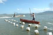 Secretaria da Agricultura mantém interdição de cultivos de moluscos em Palhoça