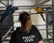 """PC deflagra a Operação """"Bioma"""" em combate ao tráfico de animais silvestres em SC"""