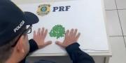 Içarenses são detidos pela PRF com 100 comprimidos de ecstasy na BR-101