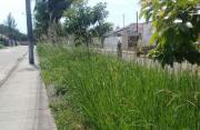 Canteiro de Avenida Ulisses Guimarães está tomada pelo mato