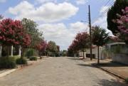 Projeto de arborização já contemplou oito ruas do Município