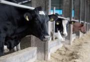 Agronegócio catarinense bate recordes nas exportações em 2019
