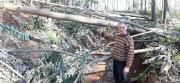 Ciclone Extratropical resulta em perdas ao agronegócio em Siderópolis