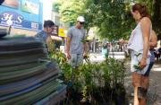 Mudas de árvores são distribuídas no Centro de Araranguá