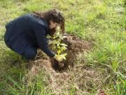 Voluntários do Tabelionato plantam árvores pela cidade