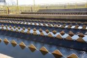 Altas temperaturas influenciam na proliferação de algas