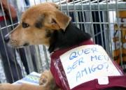 Feira de Adoção: Cães adultos em busca de um lar