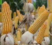 Epagri divulga análise detalhada dos riscos da estiagem para a agricultura