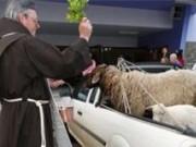 Animais serão abençoados em festa de São Francisco de Assis