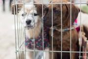 Criciúma Shopping recebe feira de adoção de animais