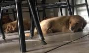 Polícia Militar pede ajuda para adoção de cães abandonados