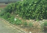 Morador do Bairro Elizabete faz horta em passeio público