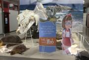 Museu deMuseu da Unesc inicia campanha de conscientização ao coronavírus com crianças