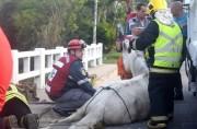 """Cavalo é sacrificado após """"engalhar"""" pata em ponte"""