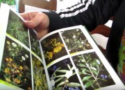 Professora elabora documentário sobre plantas medicinais