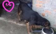 Adoção: cadelinha tímida para fotos, mas muito carinhosa