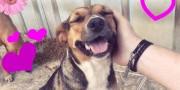 Cachorrinha carinhosa para adoção