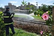 Vegetação pega fogo nas margens dos trilhos na Avenida Procópio Lima